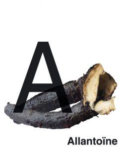 allantoïne