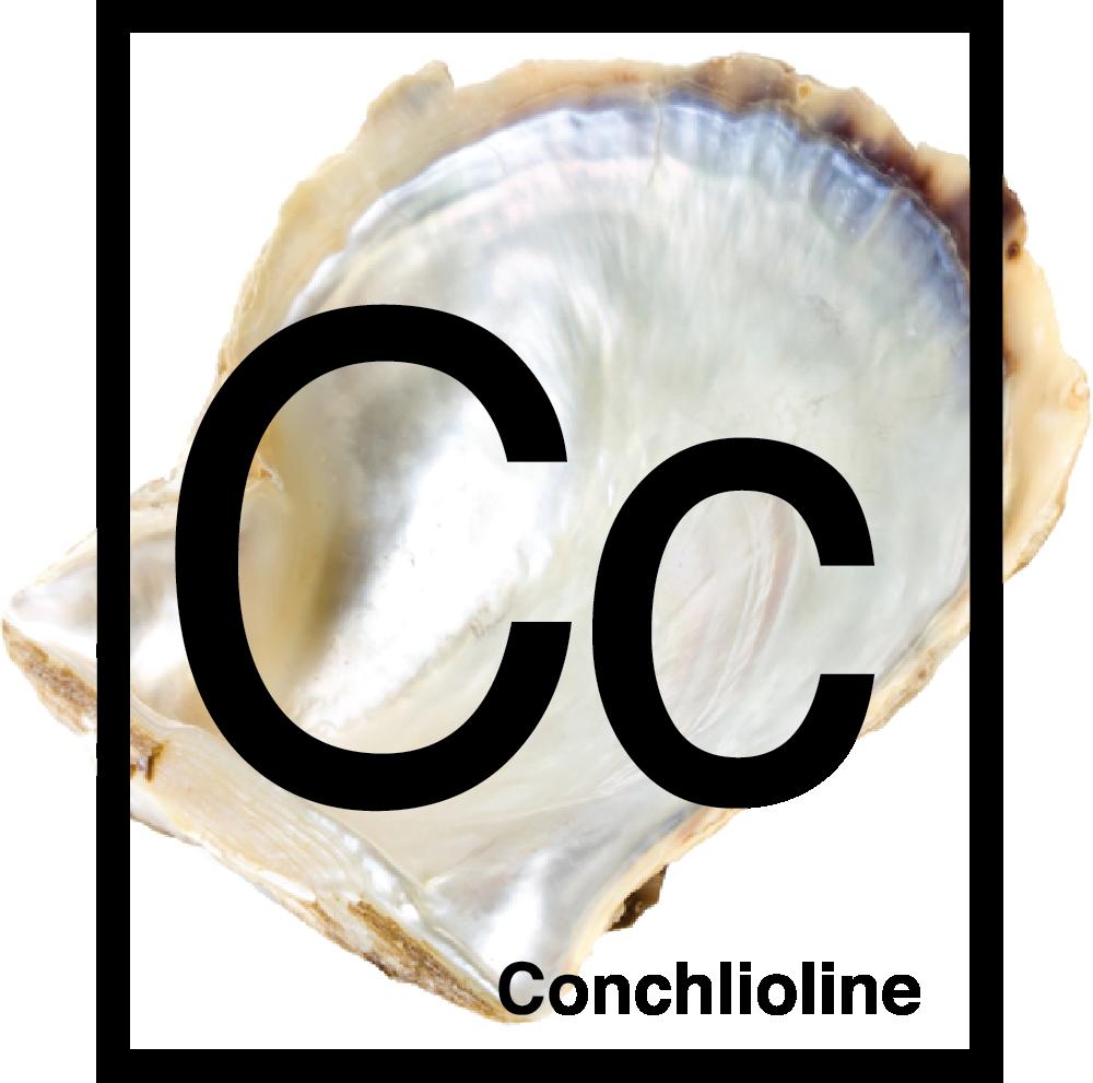 conchilioline