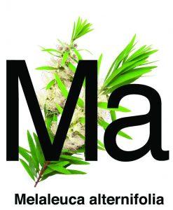 melaleuca alternifolia